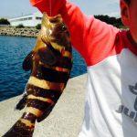 アジゴでキジハタ釣り