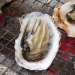 牡蠣の季節になりましたね!小長井町魚協直売店