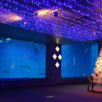 水族館のハッピークリスマス