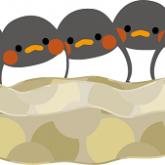 長崎のツバメ