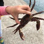 古里港でカニ釣り!為石漁港では・・